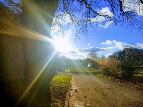 Spaziergang im Wald / bibismusicnonstop